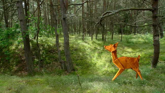 deer - Blanka Pentela